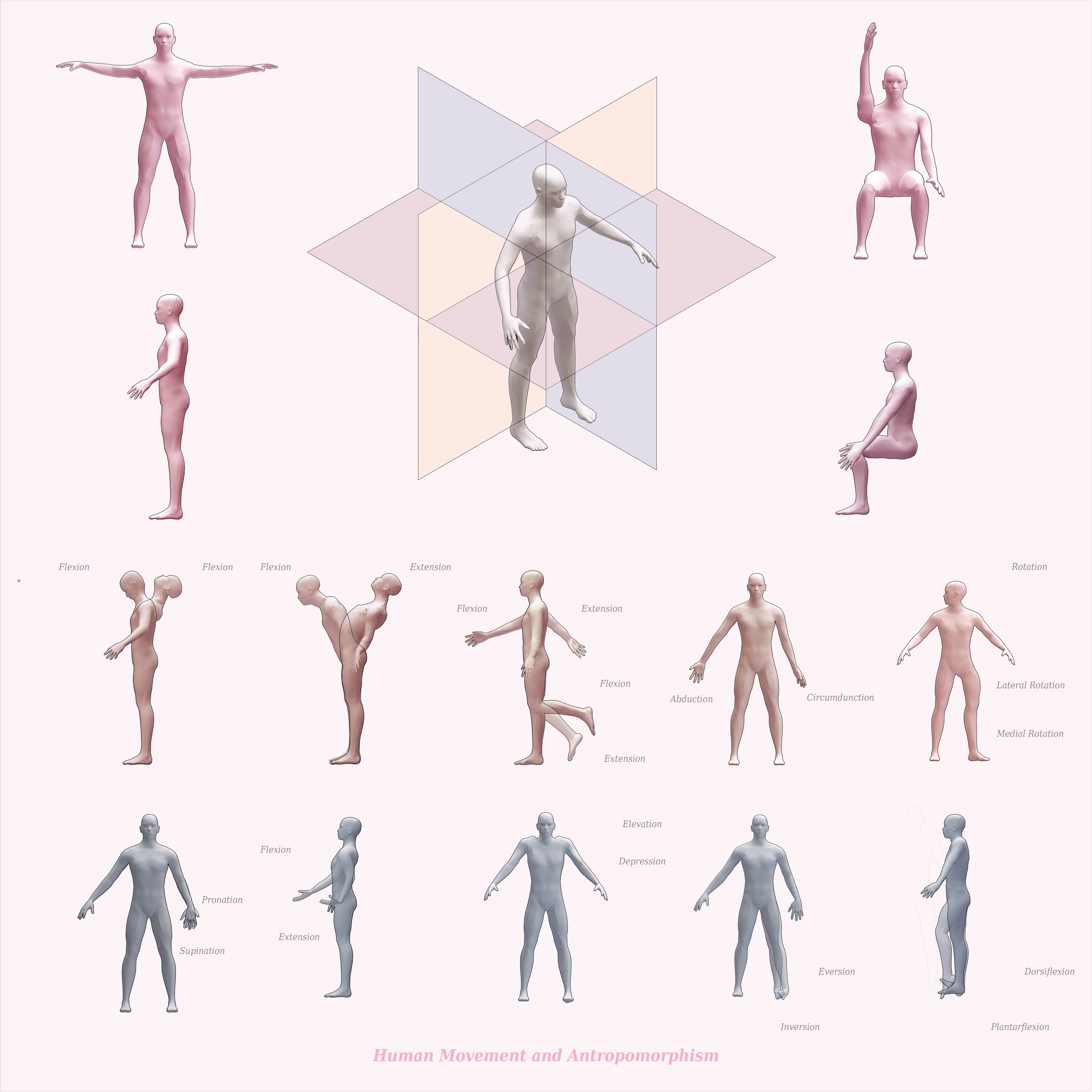 Human Anatomy Diagram – Tools For Architecture